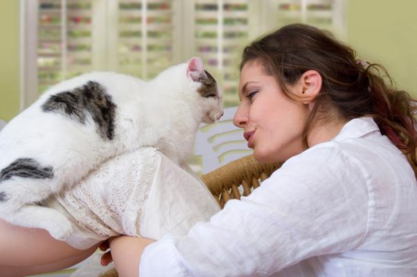 نتيجة بحث الصور عن قطة وسيدة حامل
