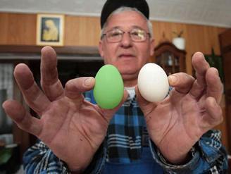 البيضة العادية وبيضة أشهر دجاجة بالمكسيك